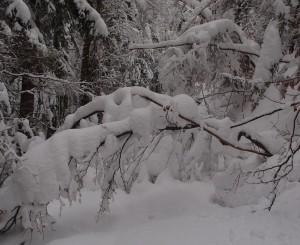 Der schwere Schnee beugt die Bäume