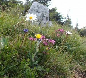 Sommerblumen auf der Scheibe