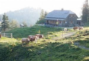Kräuterinhütte in der Morgensonne