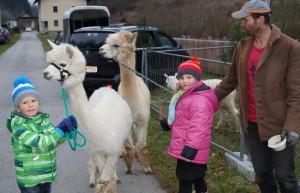 Heuer erstmals dabei - Alpakas vom Sulzbach